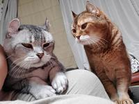 新コロナ・熱中症予防で一歩も外へ出られず猫が良き相棒となる2020/8/15 in Tokyo - むっちゃんの花鳥風月  ( 鳥・猫・花・空・山 )