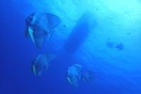20.8.15クールダウン - 沖縄本島 島んちゅガイドの『ダイビング日誌』