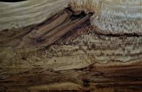 スポルテッド栃杢目反り割れ - SOLiD「無垢材セレクトカタログ」/ 材木店・製材所 新発田屋(シバタヤ)