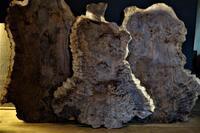 Claro Walnut Burl  クラロ瘤変形型詳細写真 - SOLiD「無垢材セレクトカタログ」/ 材木店・製材所 新発田屋(シバタヤ)
