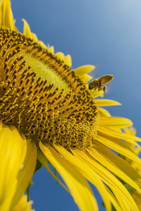 Sun 3 Sunday -夏- #31 - jinsnap(weblog on a snap shot)