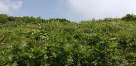 2020夏登山キロク(雨飾山その2) - 山猫を探す人Ⅱ