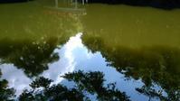 氷川神社の神池が気になって - 散策で発見、自分の街のいいところ