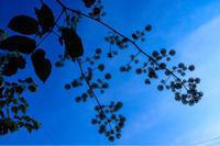 夏の朝 - 松之山の四季2