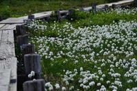 みちのく花の山へⅢ - 人生山あり