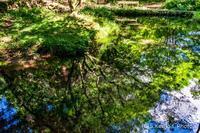 レジ袋 - 撃沈風景写真