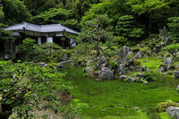 青岸寺の苔と緑 - 花景色-K.W.C. PhotoBlog