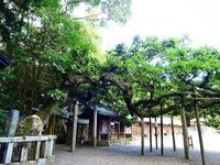 樹齢550年楢の木と大吉 - NATURALLY