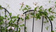 暑さで体調が。。。それでも花は見ていたい - わらびの庭づくり。時々猫