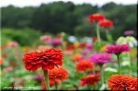 夏の終わりの気配 - 北海道photo一撮り旅