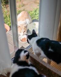 毎日来てよ - 猫と夕焼け