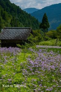 里山に咲く - 風と旅して