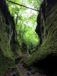 苔の回廊2020 - 晴れときどきPUGSLEY