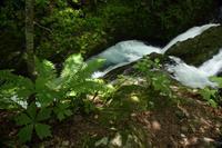八千穂高原自然園を歩く#2 - 風の彩りー3