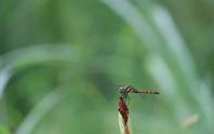 フィールドaの記録 2020/8/17 - 昆虫(動植物)撮影記録