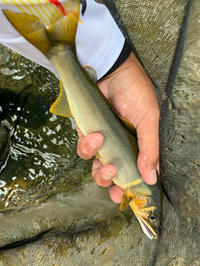 四万十川鮎釣行の思い出❣️ - 漁師です・・・