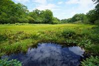 変化に富んだ天生県立自然公園Ⅰー湿原、ブナ、カツラの巨木 - Turfに魅せられて・・・(写真紀行)