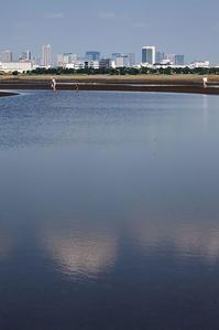 TOKYO2020・・・・葛西臨海公園 - 風に吹かれて