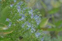 6月の山歩き①**花の三瓶山へ - きまぐれ*風音・・kanon・・