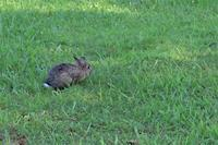 久々に見かけた公園の兎さん、他 - ぶらり散歩 ~四季折々フォト日記~