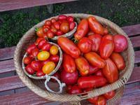 753、イタリアントマトの収穫とスープ作り - 五十嵐靖之 趣味の写真と短歌