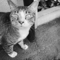 地域猫のトンちゃん - モノクロ写真をアップする!