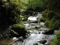 『釜ヶ滝三の滝へ・・・・・』 - 自然風の自然風だより