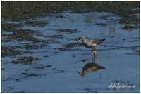 南港野鳥園にて - 今日のいちまい