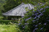 紫陽花~橋本院 - katsuのヘタッピ風景