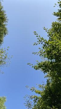 日々のコトの葉だより vol.8 〜今日のごはん何ですか?〜 - 北軽井沢スウィートグラス