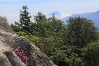 日向山のオオビランジと・・カモシカでした(^o^) - ヤッホー!今日はどちらへ?
