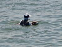 ターシャと海水浴 - 湖畔に暮らすミュージシャンと愛犬ハンク/ターシャの日記