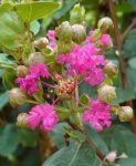 花が咲いてる・・・ - うまこの天袋