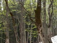 思い出の撮影行美人林後半 - 日本あちこち撮り歩記