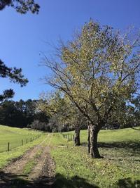 インターネットのデメリット/  A Walk Passed The Fairy Paddock - アメリカからニュージーランドへ