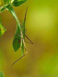 季節は翅で知る - M2_pictlog
