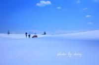 美瑛の雪景色 - ロマンティックフォト北海道☆カヌードデバーチョ