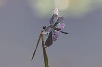 蝶のように舞い… - Surrounded by nature