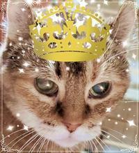 祝い!長寿ママ猫メグ18歳(88歳)の誕生日を迎えました2020/8/23 in Tokyo - むっちゃんの花鳥風月  ( 鳥・猫・花・空・山 )