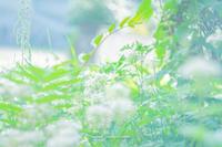 草むらも。 - Yuruyuru Photograph