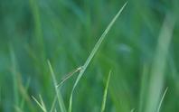 フィールドn3の記録 2020/8/30 - 昆虫(動植物)撮影記録