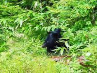 ツキノワグマ - 飛騨山脈の自然