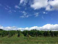 夏の葡萄畑と、エキサイトブログに思うこと - 何もしない贅沢