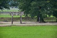 神社の無い神社 - Mark.M.Watanabeの熊本撮影紀行