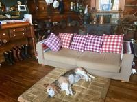 ターシャ特等席 - 湖畔に暮らすミュージシャンと愛犬ハンク/ターシャの日記