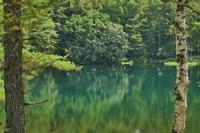 緑滴る・・・御射鹿池の静謐(2)・・・2020年真夏の奥蓼科 - 『私のデジタル写真眼』