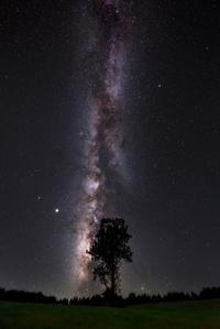 天賦の樹 - Qualia