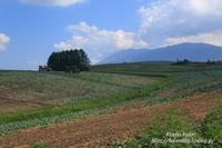 夏の終わりの高原にて - 風の彩りー3