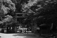 コロナ・酷暑・奈良2 - デーライトなスナップ