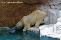 2020年7月天王寺動物園その3 - ハープの徒然草